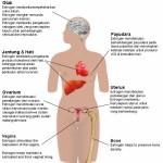 Hormon Estrogen dan Phytoestrogen